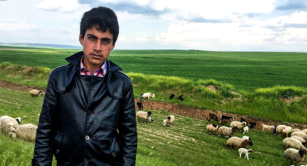 A young Iraqi shepherd