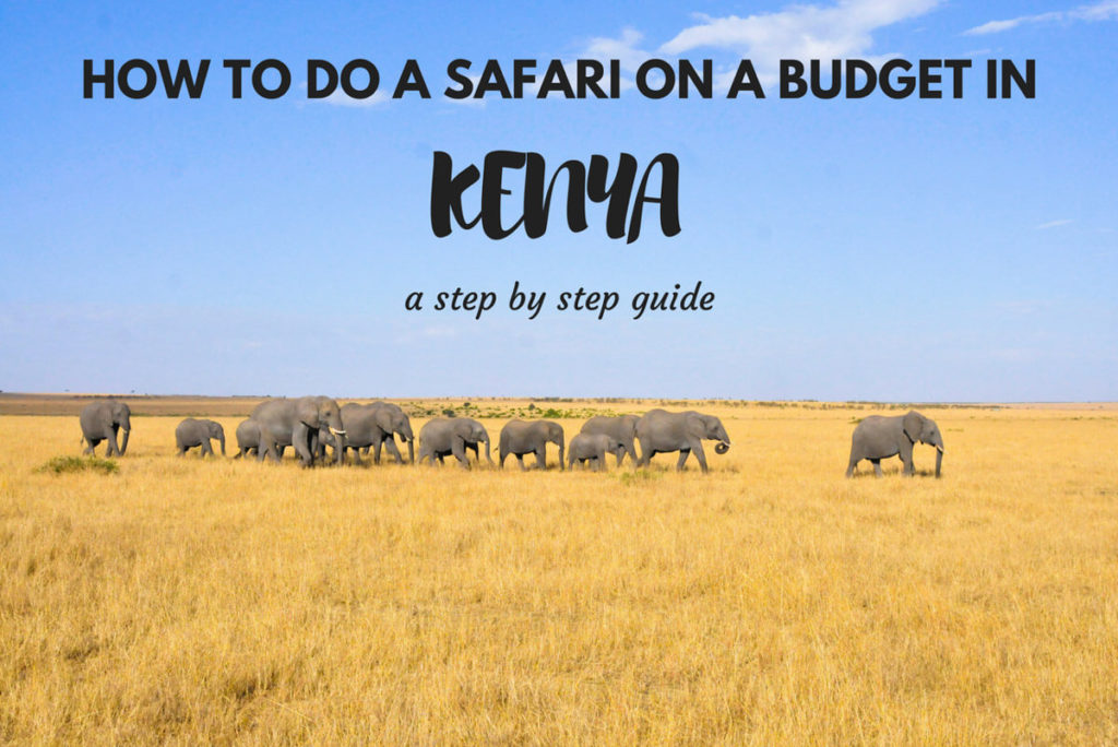 How to do a safari in Kenya on a budget: Step by step ...