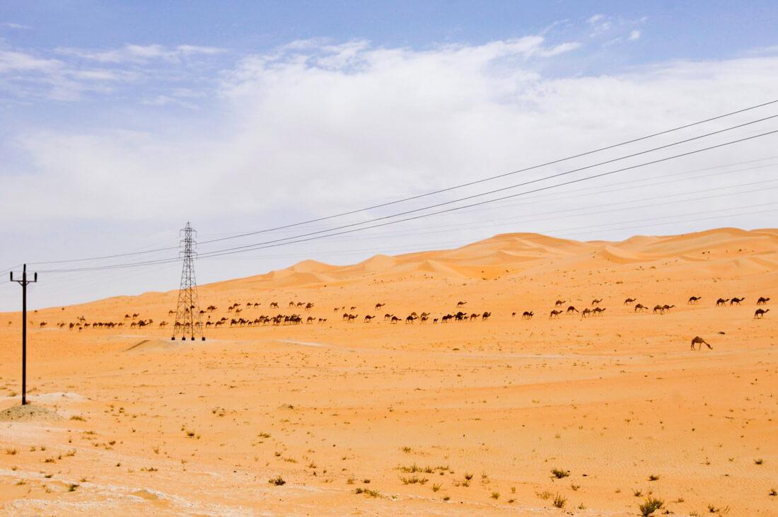 Liwa Oasis desert