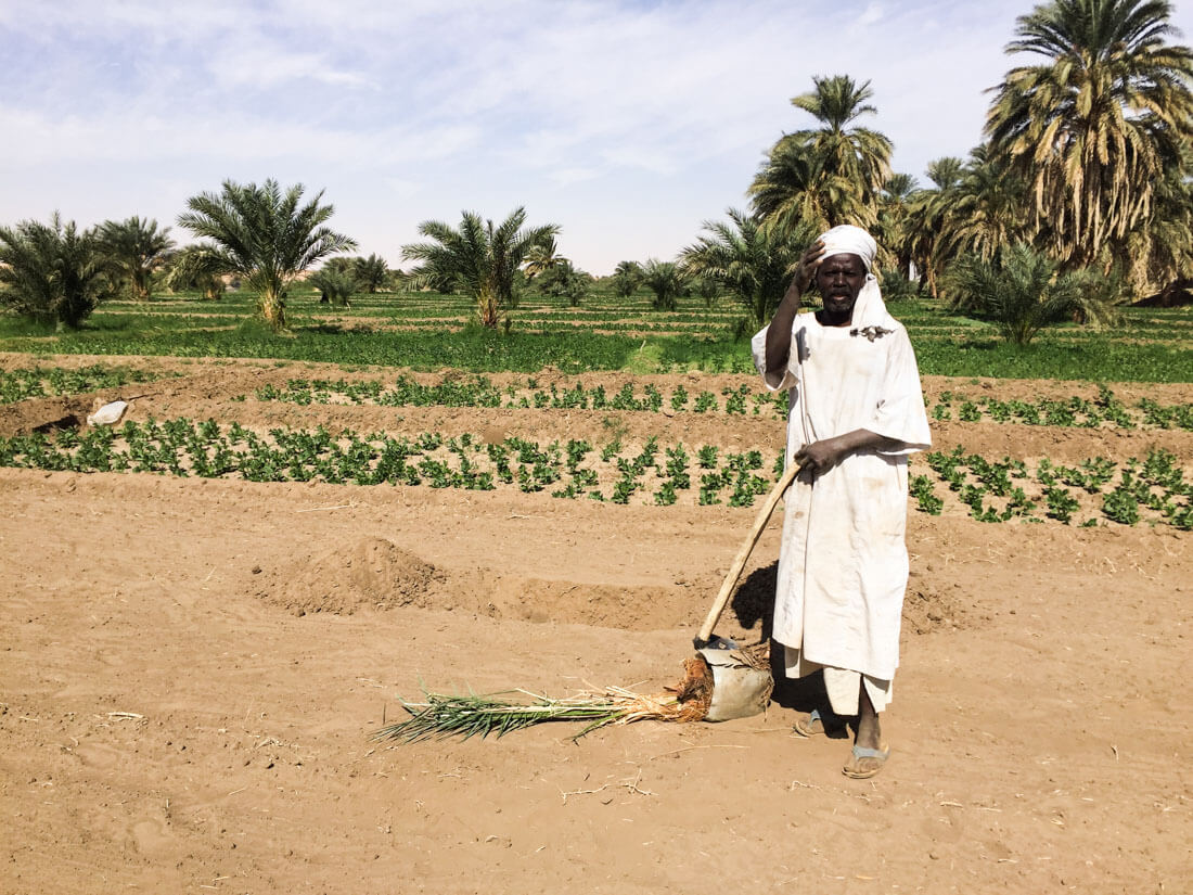 Planting palm trees in Sudan