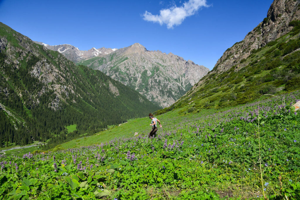 Colorful meadws Kyrgyzstan