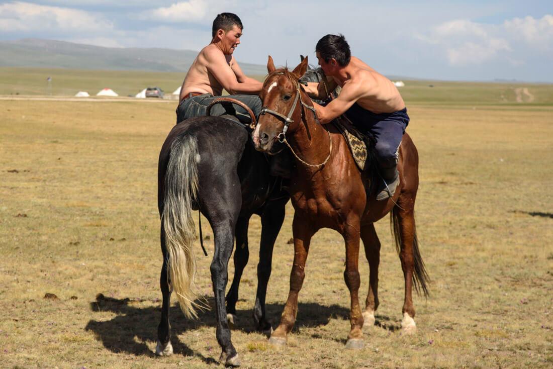 Horse wrestling