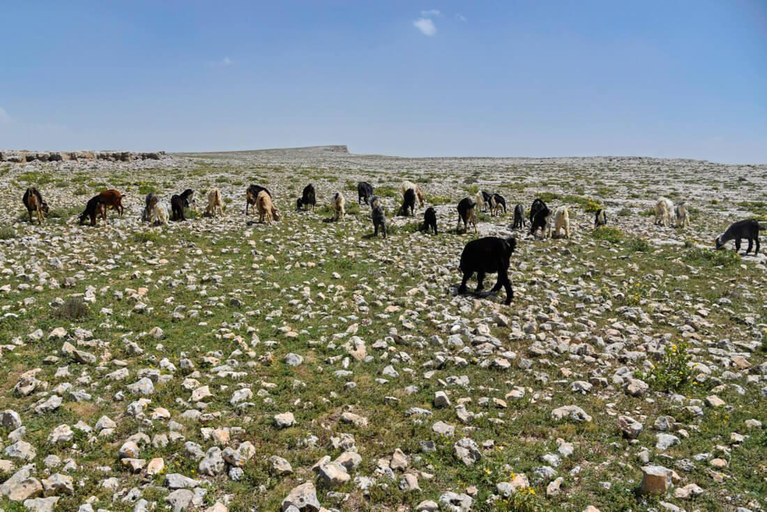 Jugurtha tableland