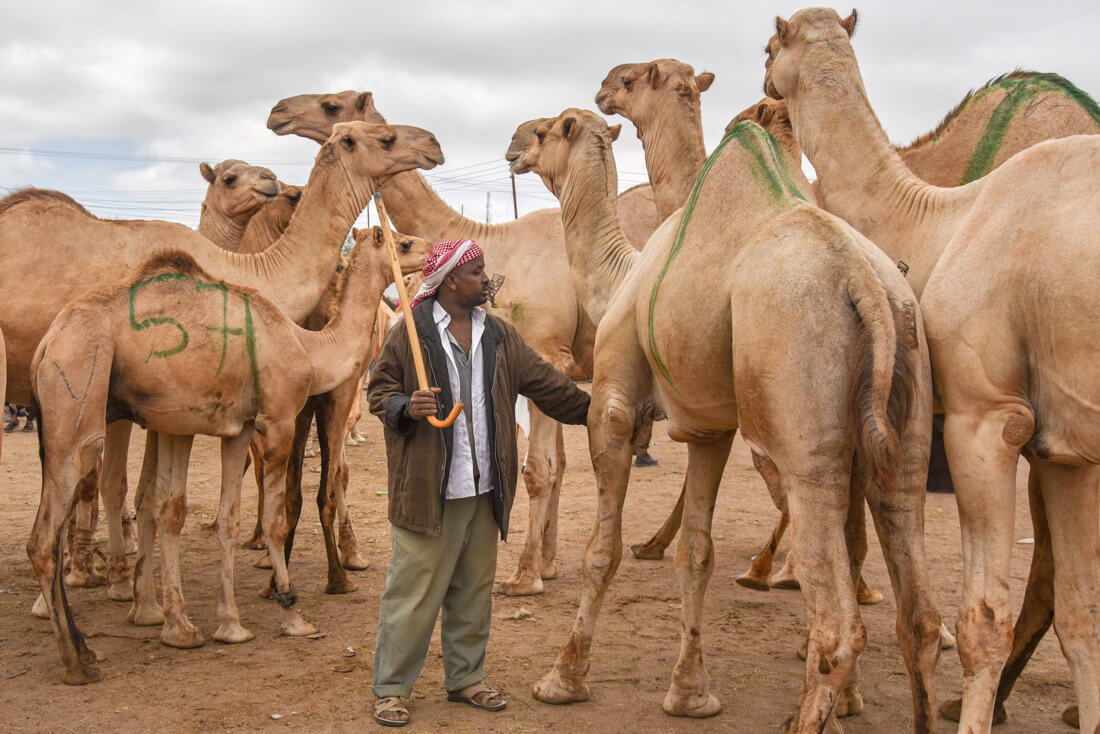 visit Somaliland
