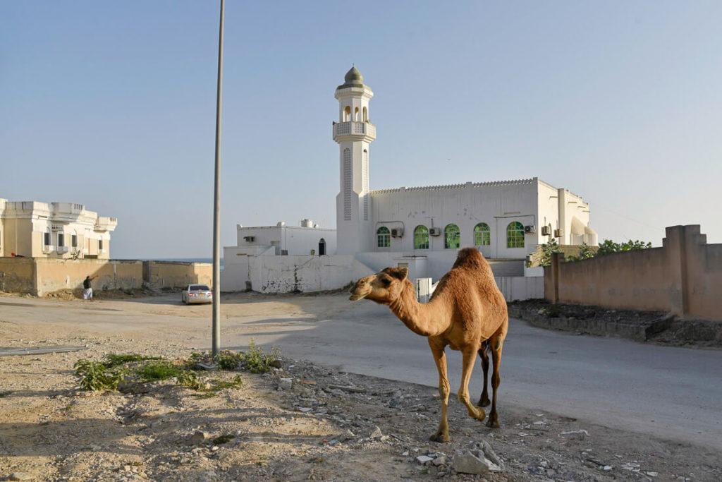 Dalkut Oman