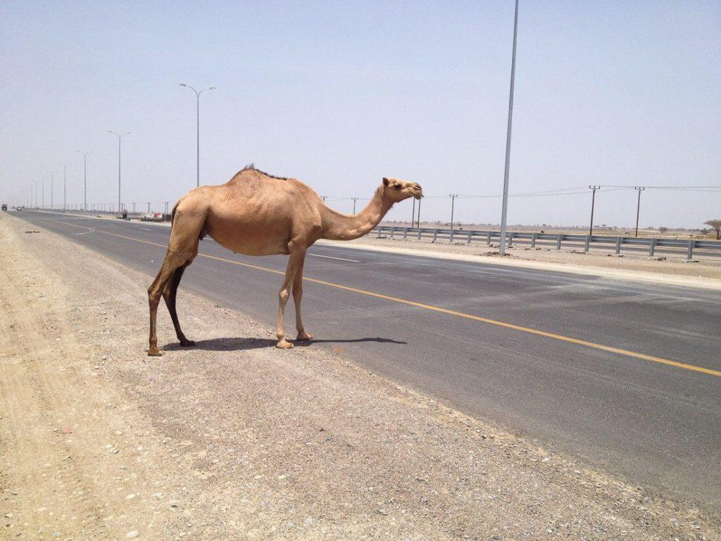 Muscat to Salalah