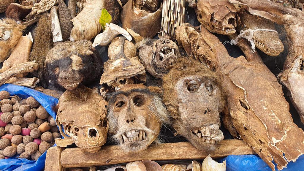cabezas de mono Mali